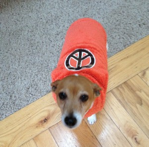 Dog wearing an orange sweater